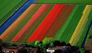 lapangan tulip, belanda
