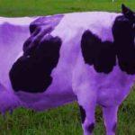 Purple Cow: Cara Beriklan Biar Digubris Calon Konsumen